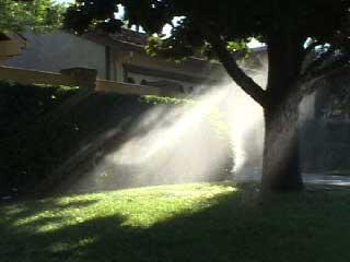 sacramento_sprinklers.jpg
